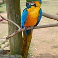 這是哪種鸚鵡呢