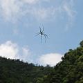 隨風飄的大蜘蛛