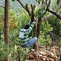 下樹標準動作8