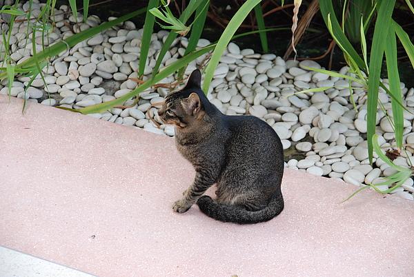 突來訪的小貓01