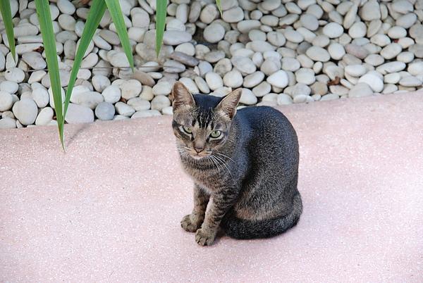 突來訪的小貓02