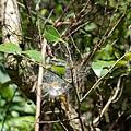 成坨的蜘蛛絲