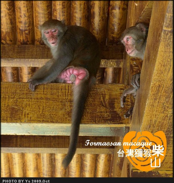 母猴2_M.jpg