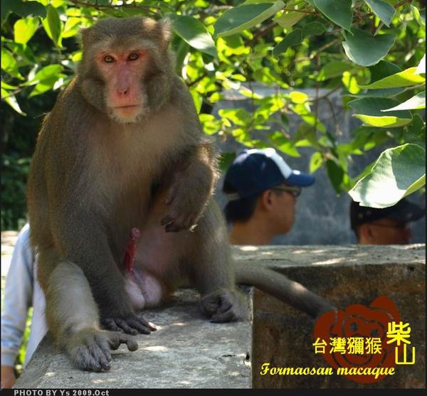 公猴2_M.jpg