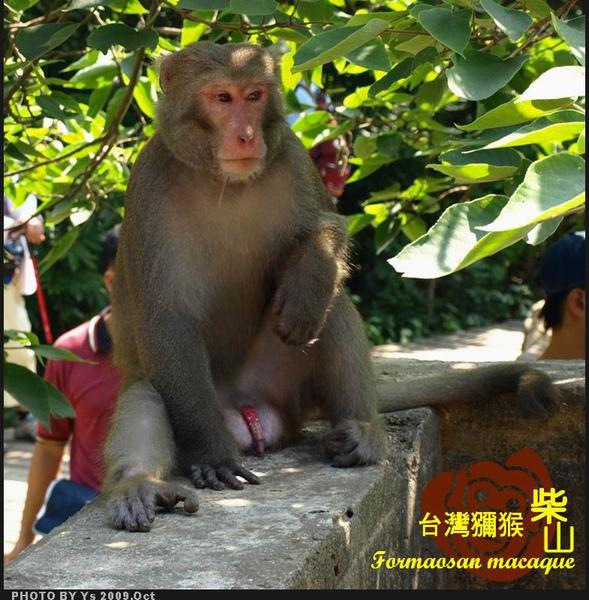 公猴_M.jpg