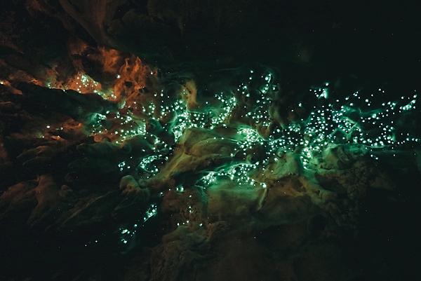 紐西蘭_洞穴藍光螢火蟲Waipu Cave Glowworm cave_shutterstock_445478287.png