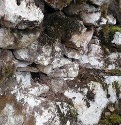 Calcaire de Comblanchien.jpg