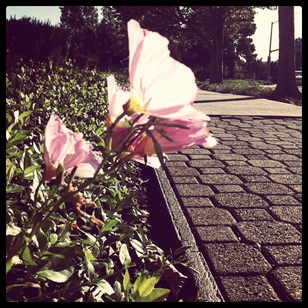 Always meet flowers in SFO
