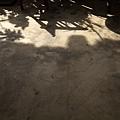 地上的影子又換戲碼了