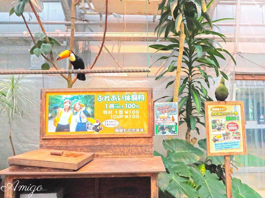 日本島根松江旅遊 出雲大社 松江花鳥園