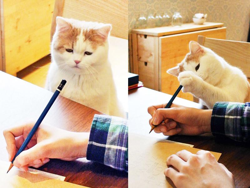 日日好文創貓老師矯正正確握筆姿勢