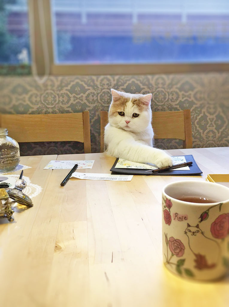 日日好文創貓鋼筆教室溜溜雪比陪伴矯正寫鋼筆字姿勢