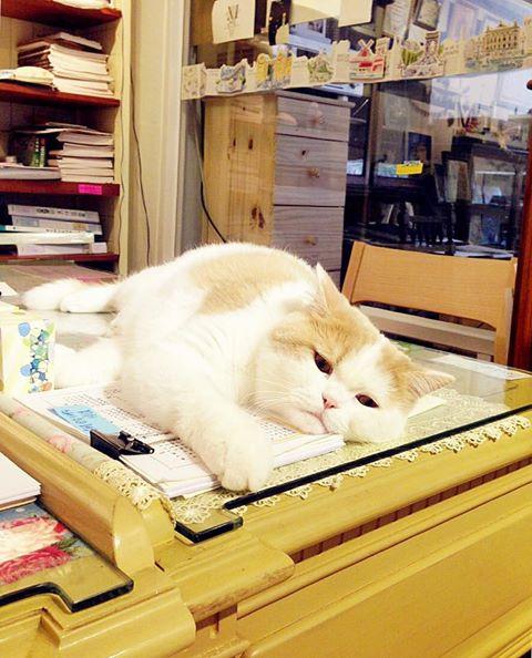 日日好文創貓鋼筆教室溜溜雪比陪伴矯正寫字姿勢