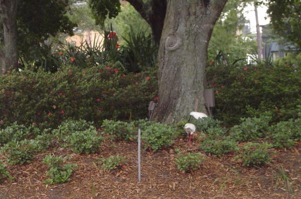 路旁的樹發現白鷺鷥