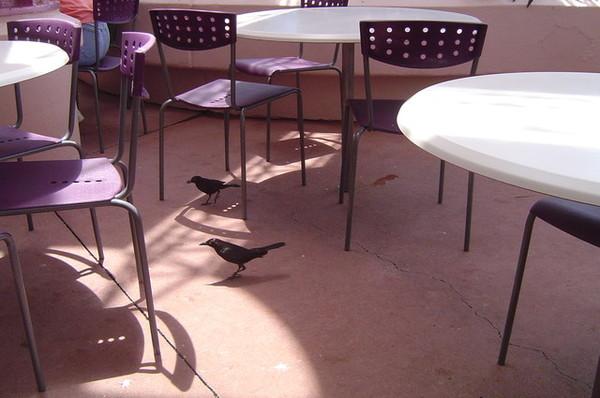 這鳥都不怕人一直再旁邊走