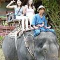 騎大象去囉!!
