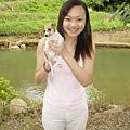 普吉島上的小狗