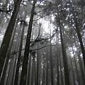 森林浴!!
