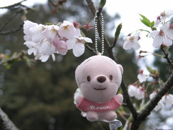 小尼與櫻花
