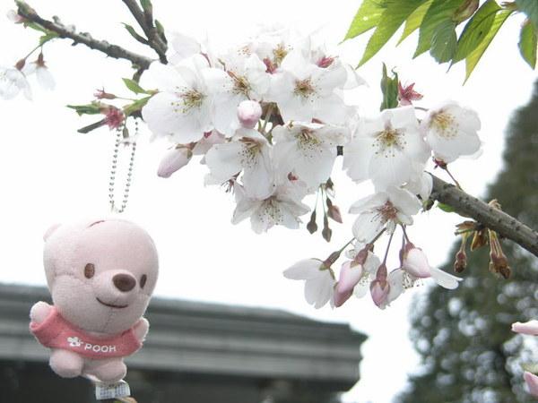 小尼與櫻花 2