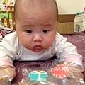 [4M]-這是妮寶要收涎的餅乾