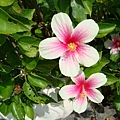 美麗的小花