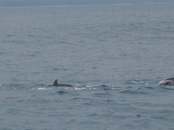 不是鯊魚喔~~~是海豚