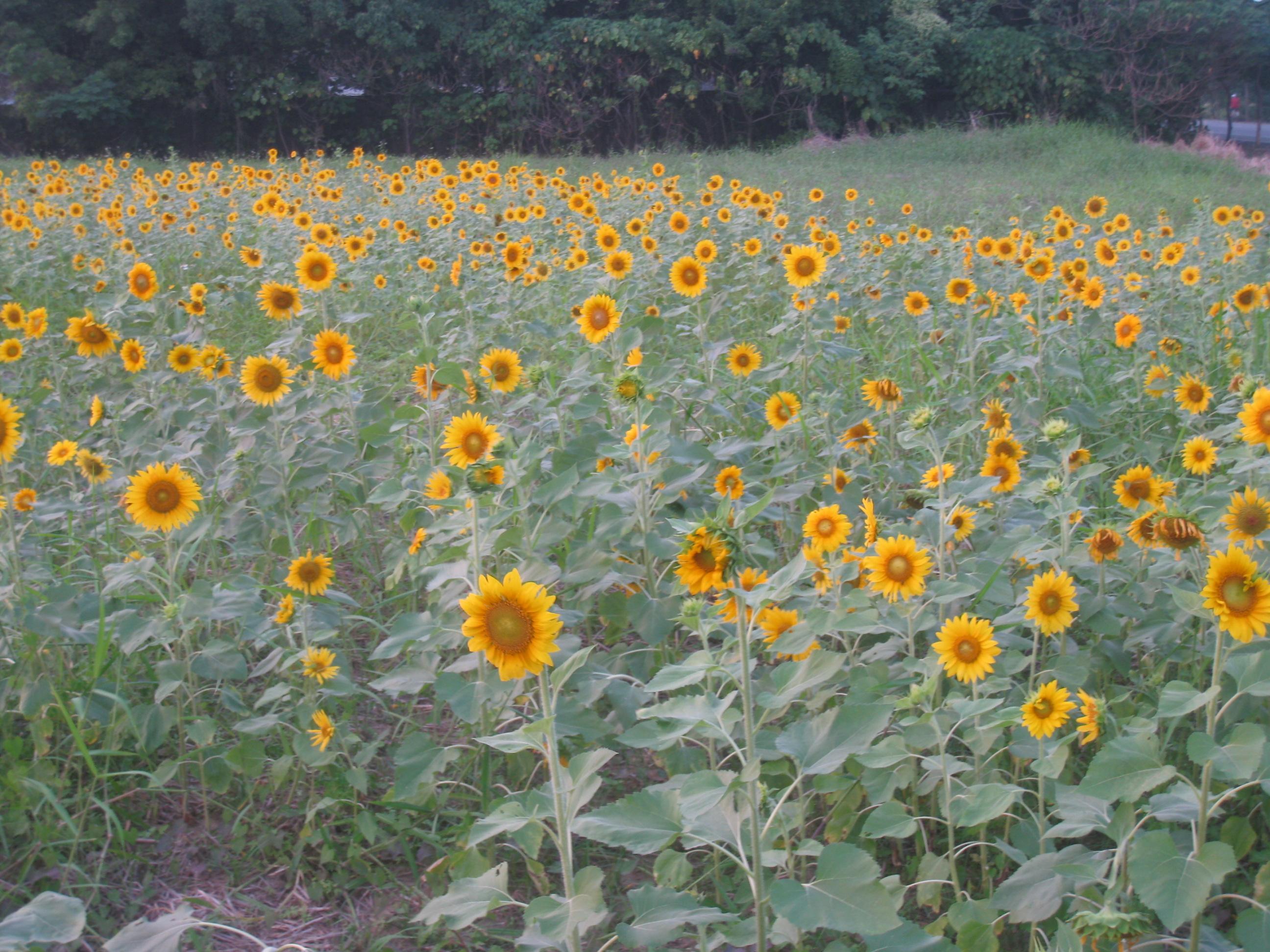 好多花啊....