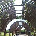 台東森林公園--花架隧道
