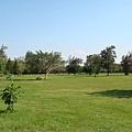 台東森林公園--大草原