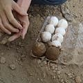 把蛋沾衛生紙在裹上泥土
