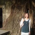 樹屋--就是在榕樹裡面的房屋