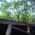 從屋裡一抬頭就是樹