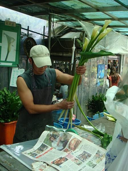 [竹子湖]--將海芋裝進有水的塑膠袋中