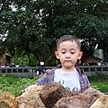 [金瓜石]--走了又出現小男孩