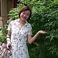 [金瓜石]--是槭樹!!