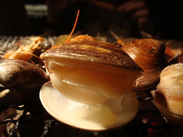[燒肉大將]--蛤打開啦~~
