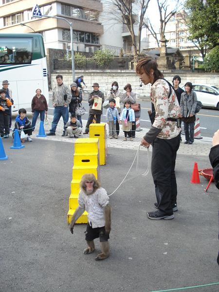 有猴子表演耶!