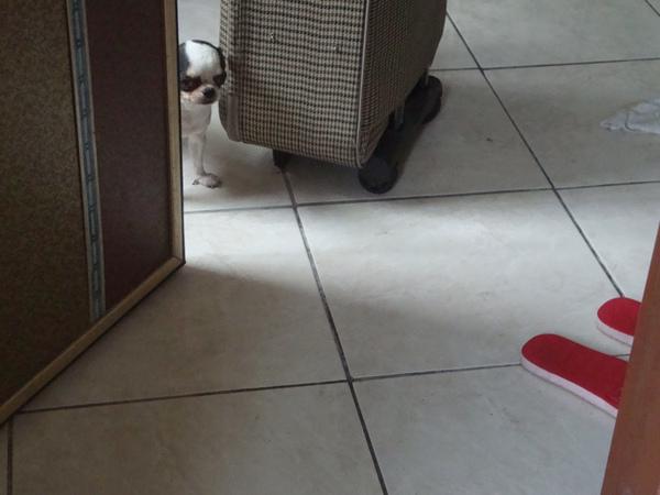 躲在門後面偷看的骰子