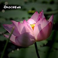 HAOCHENG