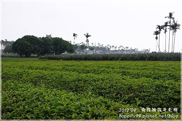猴探井天梯DSC06200