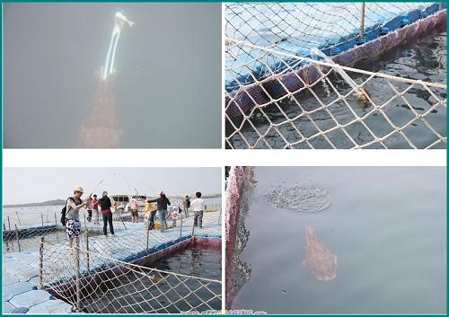 澎湖 海洋牧場5.jpg