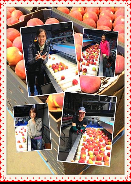 2012.11.01 (1) 桃子姐妹花。
