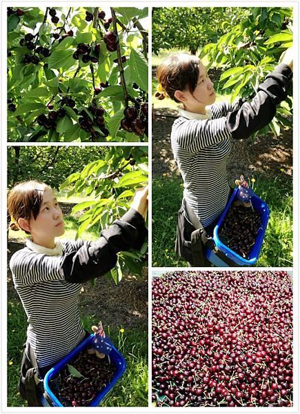 2012.12.13 Cherry