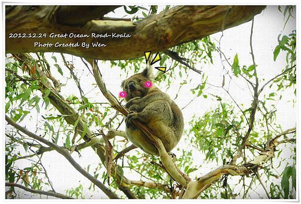 2012.12.29 Great Ocean Road-Koala (2)