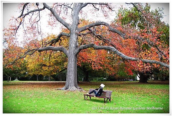 2013.06.03 (29) Royal Botanic Gardens Melbourne