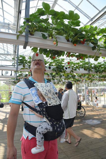 2018.05.12 新屋農業博覽會