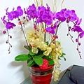P1010354 紫色蝴蝶蘭