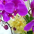 P1010357 紫色蝴蝶蘭