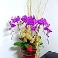 P1010355 紫色蝴蝶蘭